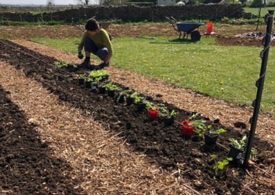 Planting out on the beds - image