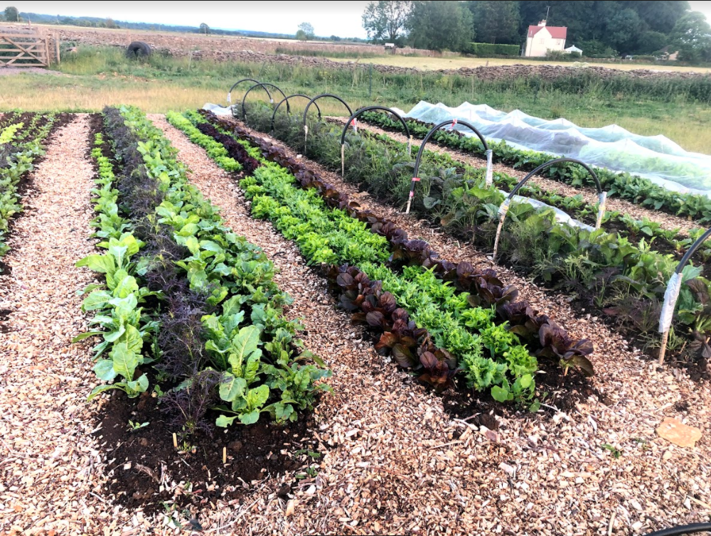 Image of salad beds at Crackstone